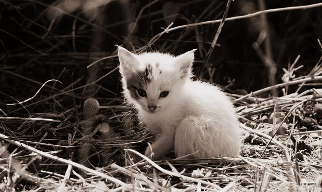 Cat cat baby baby cat, animals.