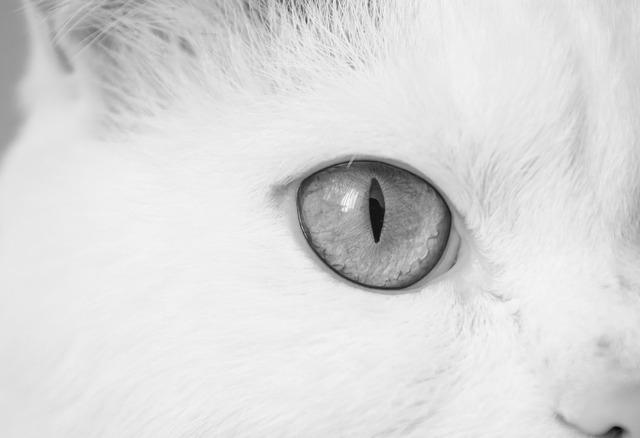 Cat cat eye eye, animals.