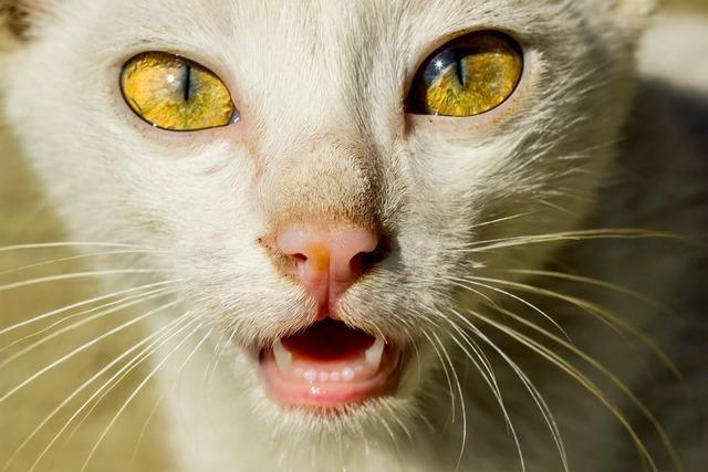 Cat cat face cat's eyes, animals.