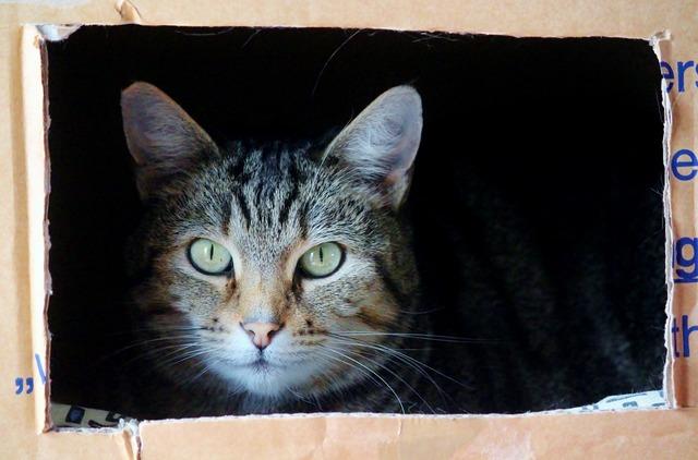 Cat cat face moving box, animals.