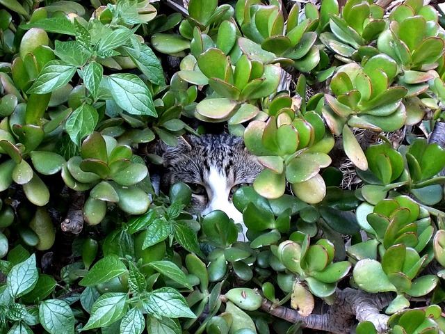 Cat cat face natureworld, animals.