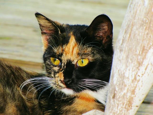 Cat cat face red, animals.