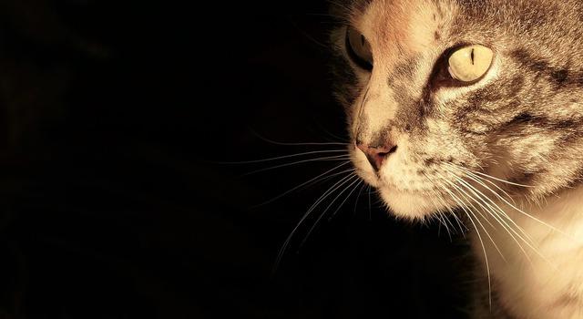 Cat cat portrait cat's eyes, animals.