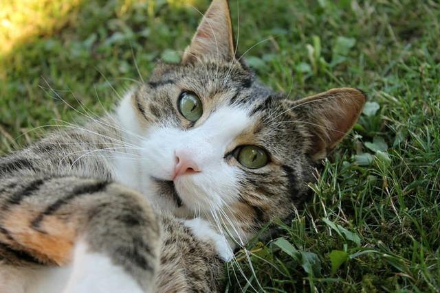 Cat cat's eyes cat face, animals.