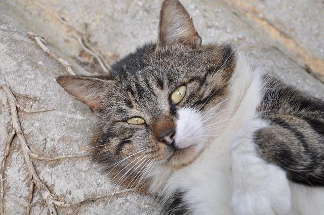 Cat cat's eyes eyes, animals.