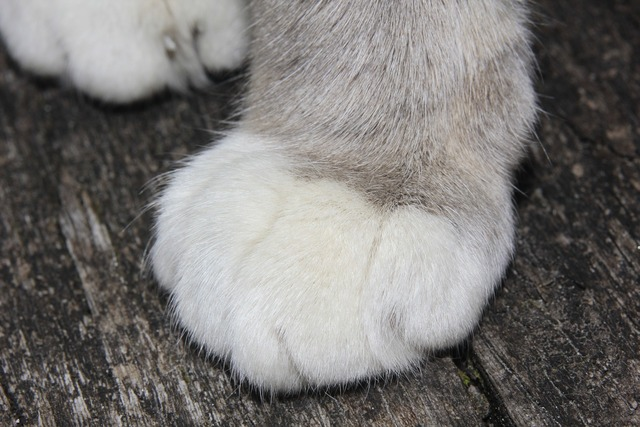 Cat cat's paw occur, animals.