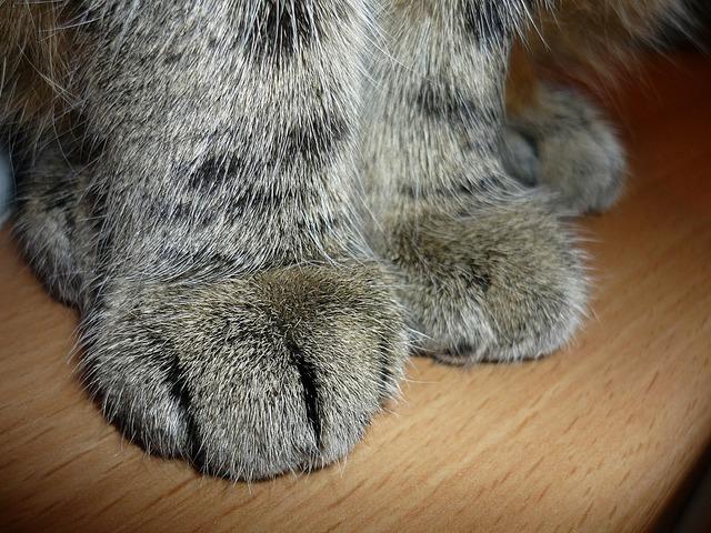 Cat cat's paw paw print, animals.