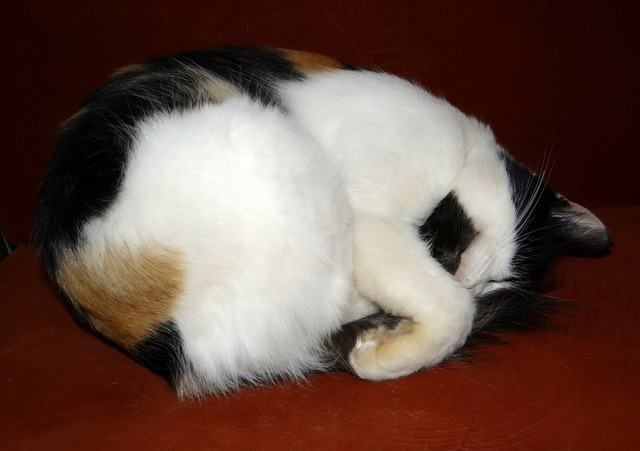 Cat cute cat deep sleep, animals.