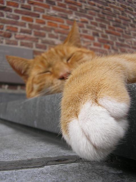 Cat cute cat is, animals.