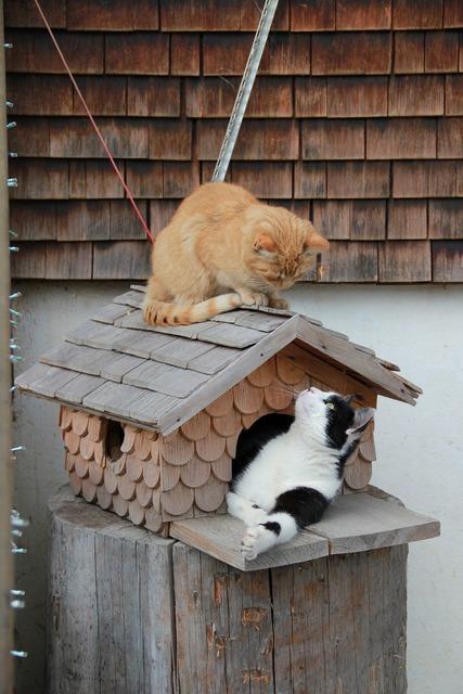 Cat cute cat pet, animals.