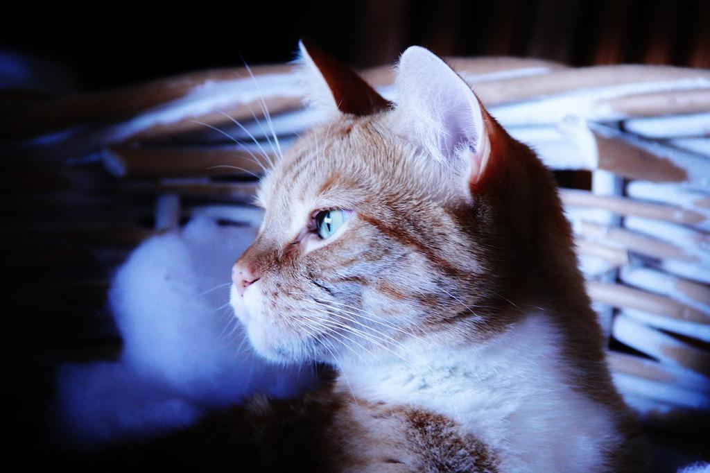 Cat dark rainy day, animals.