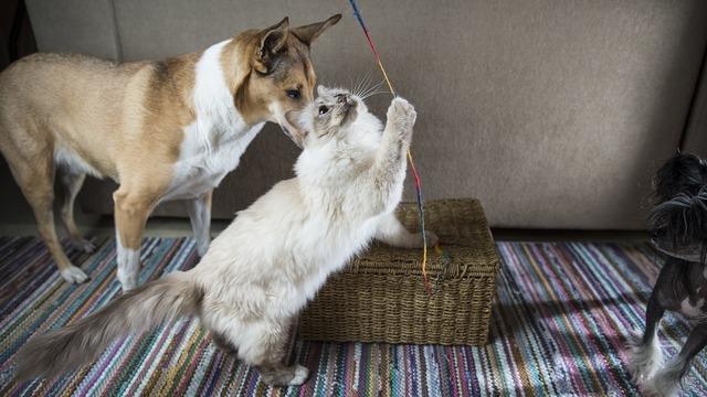 Cat dog the playground, animals.
