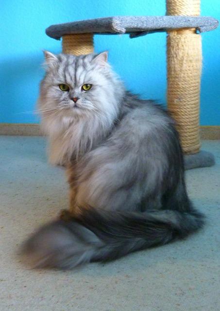 Cat domestic cat adidas, animals.