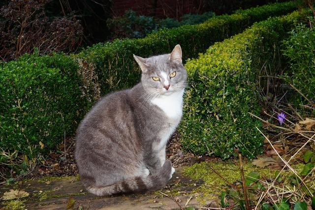 Cat domestic cat garden, animals.