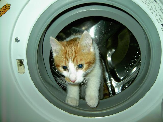 Cat domestic cat nose, animals.