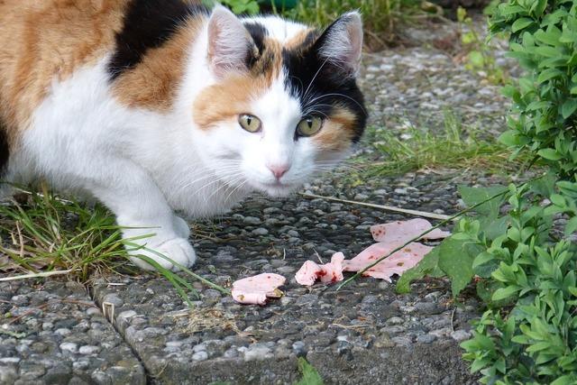 Cat eat three colors, animals.