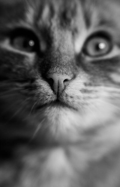 Cat eye black and white, animals.