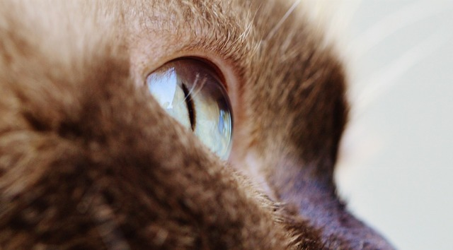 Cat eye close, animals.
