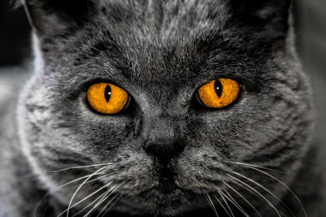 Cat eyes background image, animals.
