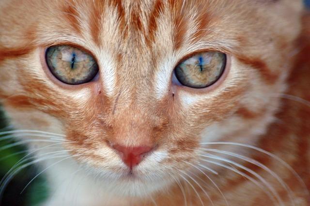 Cat eyes cat's eyes, animals.