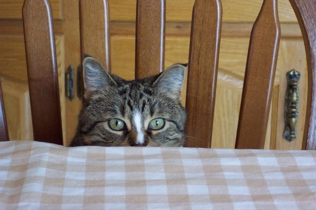 Cat eyes feline, animals.