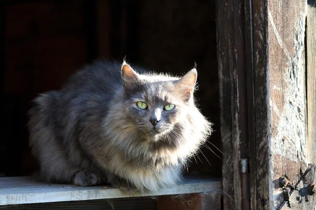 Cat eyes gray, animals.