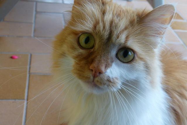 Cat eyes large, animals.