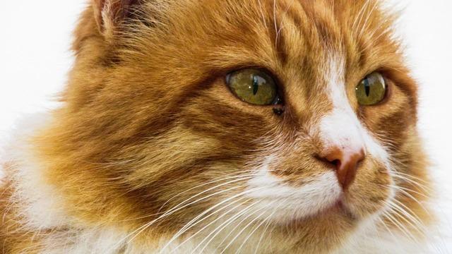 Cat eyes mammal, animals.