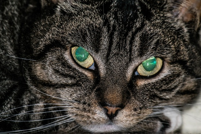 Cat eyes opal, animals.