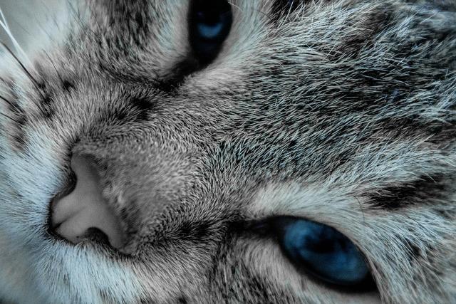 Cat eyes pet, animals.
