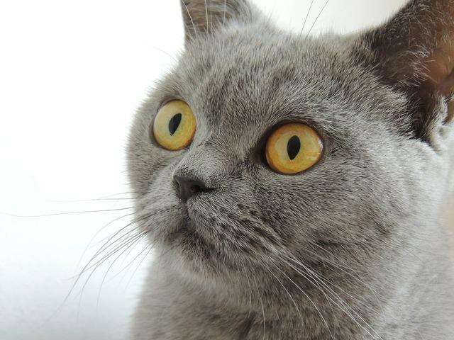Cat eyes view, animals.