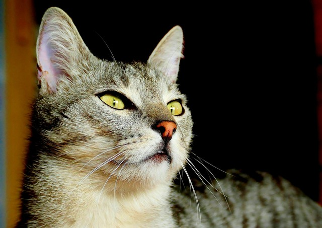 Cat face eyes, animals.