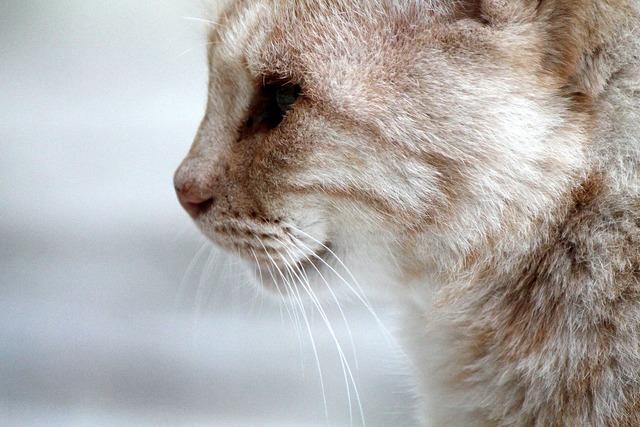 Cat face profile, animals.