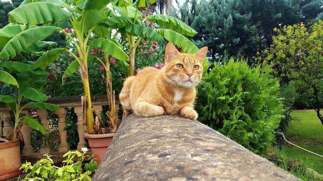 Cat fauna freedom, animals.