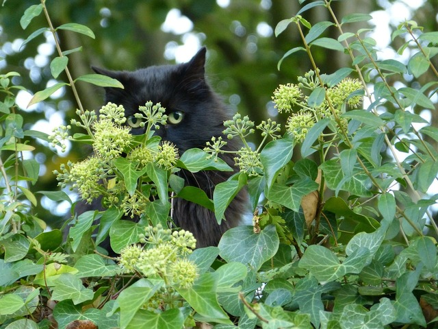 Cat felidae predator, animals.
