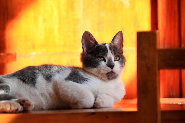 Cat feline cats, animals.