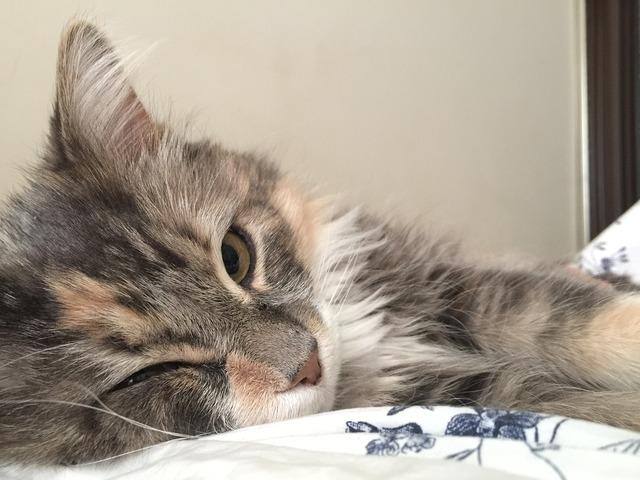 Cat feline cute, animals.