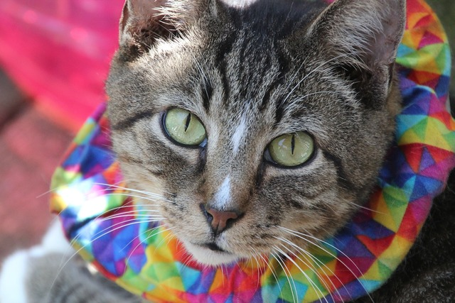 Cat feline henry, animals.