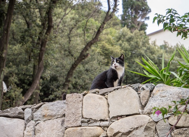 Cat feline stray, animals.