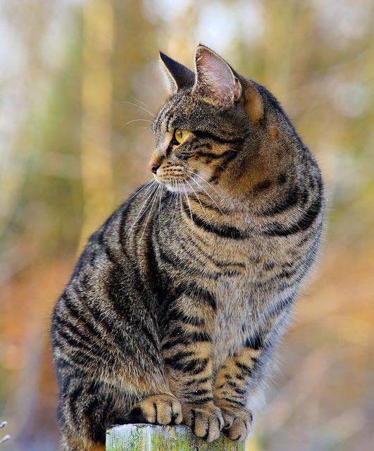 Cat female adidas, animals.