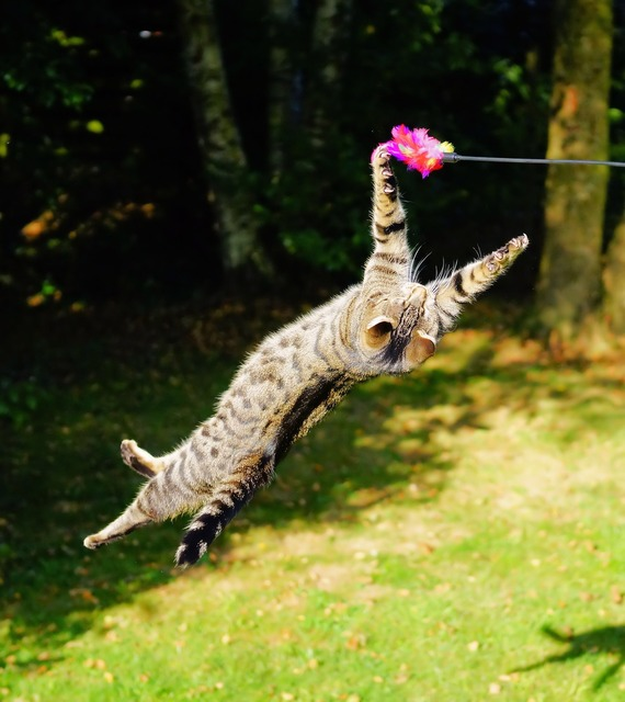Cat flying cat play, animals.