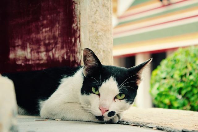 Cat fur purr, animals.