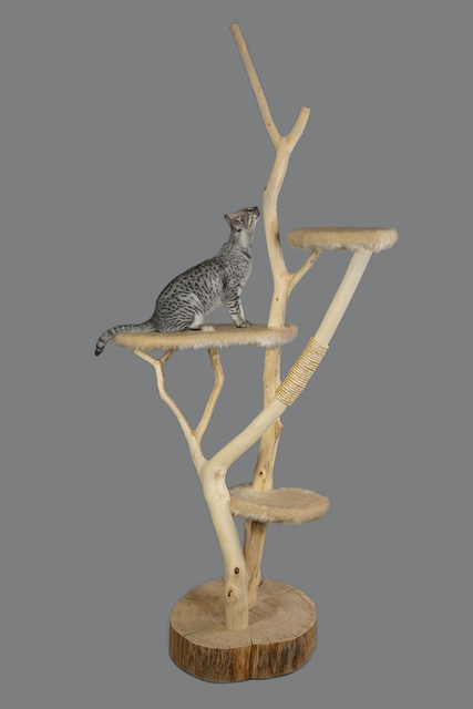 Cat furniture cat scratching post, animals.