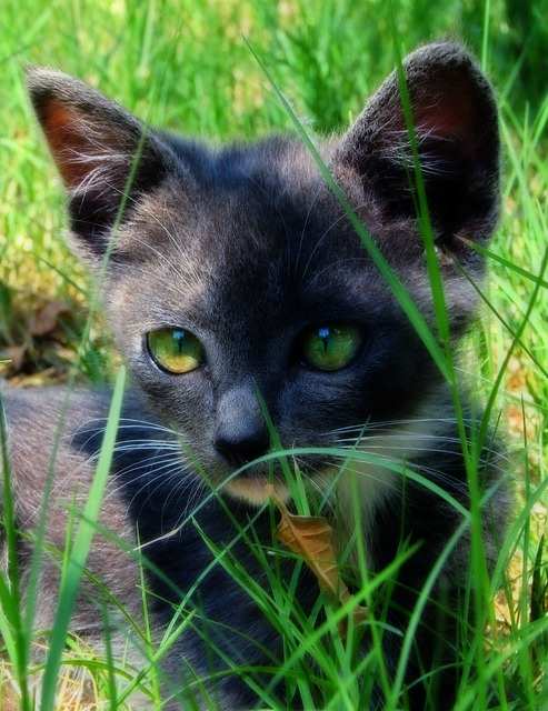 Cat grass green, animals.