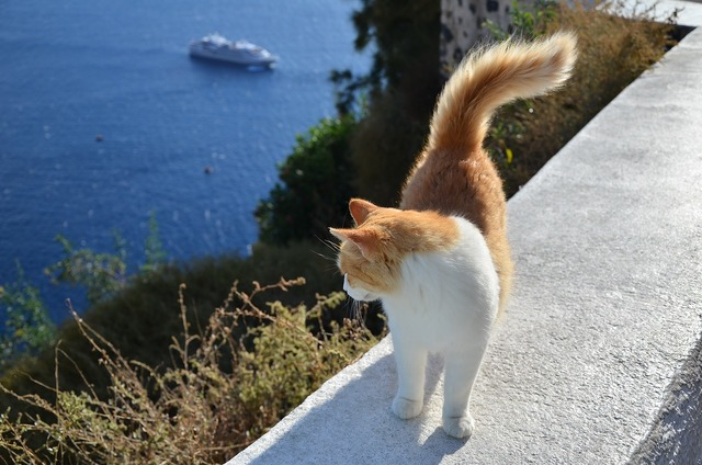 Cat greece the sea, animals.