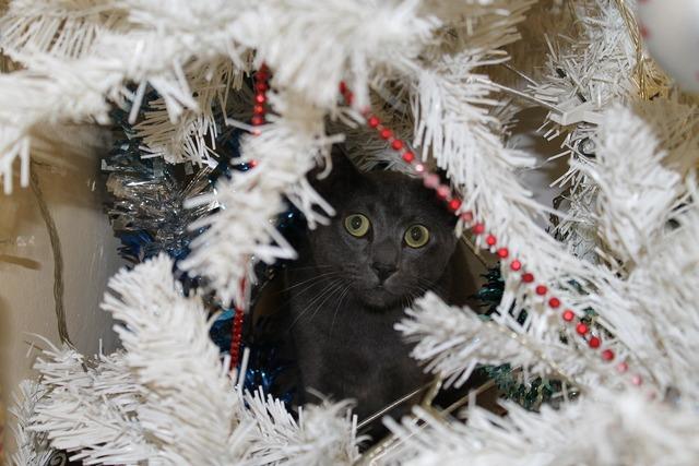 Cat grey cat christmas tree, animals.