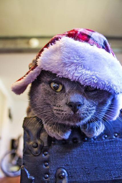 Cat hat feline, animals.