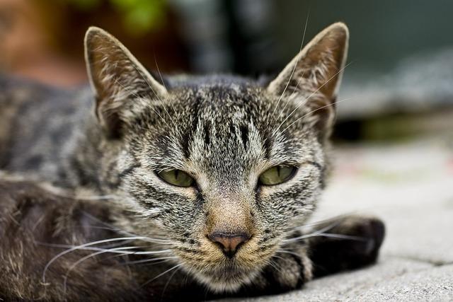Cat head cat face, animals.