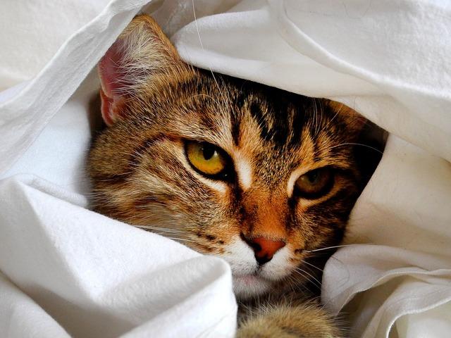 Cat head cat portrait, animals.