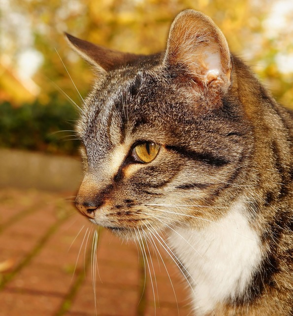 Cat head portrait, animals.